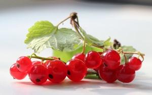 Польза красной смородины для кожи