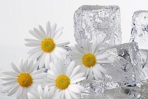 Польза протираний лица льдом из ромашки