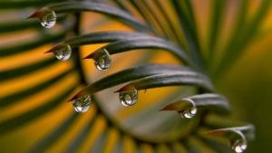 Как наносить масло кокоса на ресницы и брови?