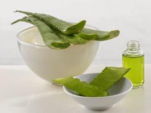Какие полезные вещества содержит растение?